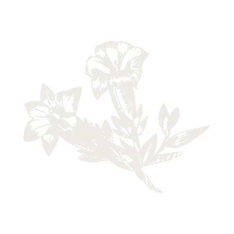 Flowers negative